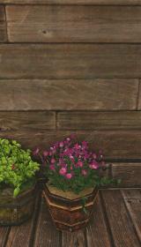 ケシの植木鉢.jpg