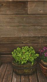 スイセンの花壇.jpg