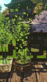 八角形の竹盆栽.jpg