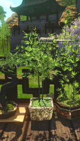 四角形の竹盆栽.jpg