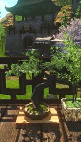 黒檀の盆栽鉢.jpg