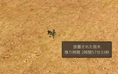 放置された苗木.jpg